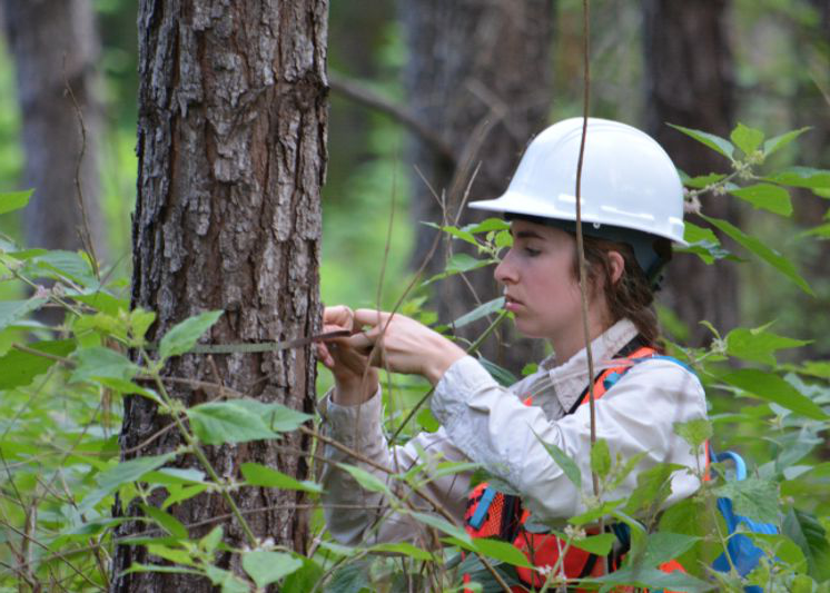 student measuring a tree